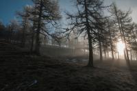 Durch den Nebel zum Licht